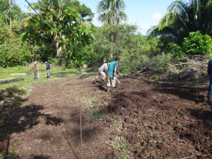 Placing a road in a degraded area which will allow future access to timber trees and cacao.